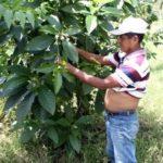 Assassination of Indigenous leader Domingo Choc sparks outrage