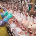 Revealed: Covid-19 outbreaks at meat-processing plants in US being kept quiet